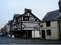 Picture of Dolphin Inn Mold