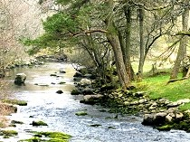 Picture of River Tryweryn