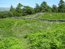 Picture of Stone Walls and Bracken