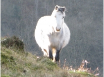 Picture of Friendly Pony on the Hillside