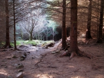 Picture of Forest Trail in Snowdonia