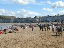 Picture of Beach Donkeys on Llandudno Beach