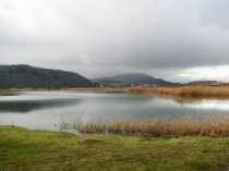 Picture of Bird Sanctuary on the Conwy River