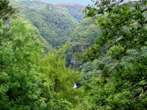 Picture of Forest View at Devil's Bridge