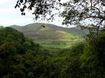 Picture of A view to Foel Wyllt