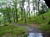 Picture of Footpath close to Dolgoch Falls