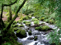 Picture of The nant dol goch