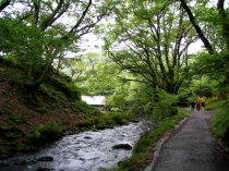 Picture of Footpath by the Nant Dolgoch