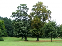 Picture of Mature Trees in Newtown