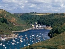 Picture of Boats in Solva Harbour