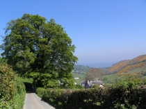 Picture of Oak Tree in the Valley