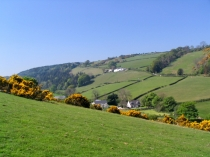 Picture of Fields of Gorse in the Valley