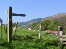 Picture of Follow the Signpost into the Enchanted Valley