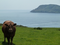 Picture of Bardsey Island and Brown Bull