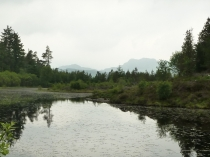 Picture of Lakeside View in Gwydyr Forest