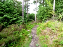 Picture of Forest Trails