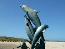 Picture of Dolphins in Cardigan Bay