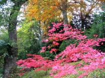 Picture of Autumn at Bodnant Gardens