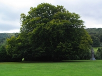 Picture of Big Tree Machynlleth