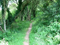Picture of Woodland on the Ceredigion Path
