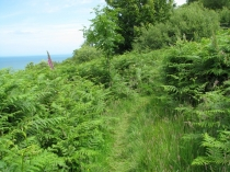 Picture of Bracken and Open Grass-lands