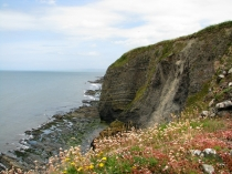 Picture of Wild Flowers on Ceredigion Coastal Path