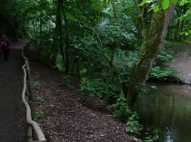 Picture of Alyn Valley Woodlands