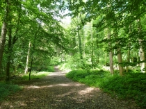 Picture of Cefn Mawr Woodlands