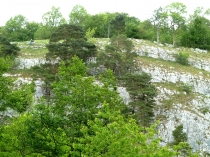 Picture of Limestone Outcrop Loggerheads Country Park