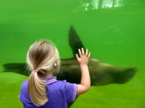 Picture of Children Watching the Sealions