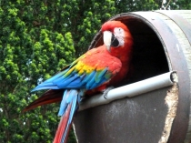 Picture of Parrot at Welsh Mountain Zoo
