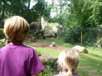 Picture of Brown Bears at the Welsh Mountain Zoo