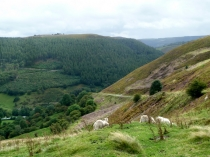 Picture of Horseshoe Pass