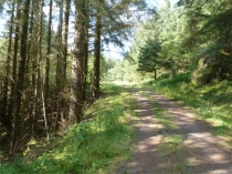 Picture of Forest Trails in Gwydyr Forest