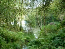 Picture of Woodlands of the Gwydir Forest