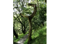 Picture of Pathway to Castell y Bere
