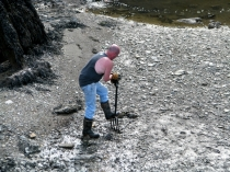 Picture of Digging for Bait on Anglesey