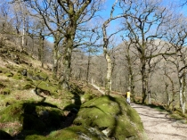 Picture of Hafod y Llan Woodlands