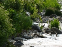 Picture of Afon Daron