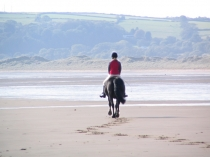 Picture of Horse Riding on the Gower