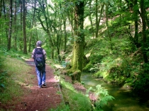 Picture of Brechfa Forest Walk