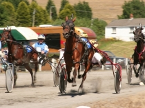 Picture of Harness Racing in South Wales