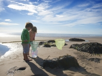 Picture of Pendine Sands Rock Pooling