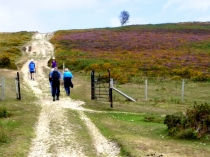 Picture of Walkers on the Conwy Mountain Walk