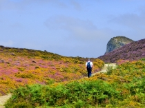 Picture of September Colours on Conwy Mountain