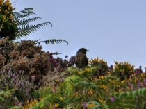 Picture of Bird Among the Bracken