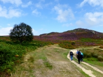 Picture of Conwy Mountain Ramblers
