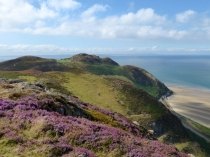 Picture of Heather on the Mountain and Penmaen-bach Headland