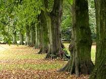 Picture of Bute Park