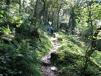 Picture of Coed Dinorwig Forest